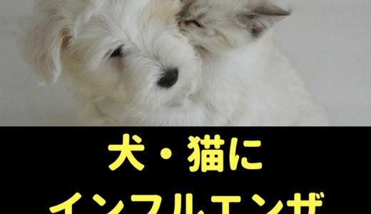 犬や猫にも人間や鳥インフルエンザは感染する?症状は?